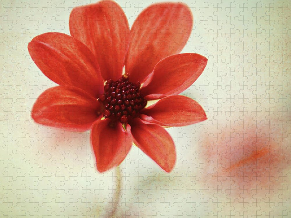 Orange Color Puzzle featuring the photograph Pretty Orange Flower by Captured By Karen Photography