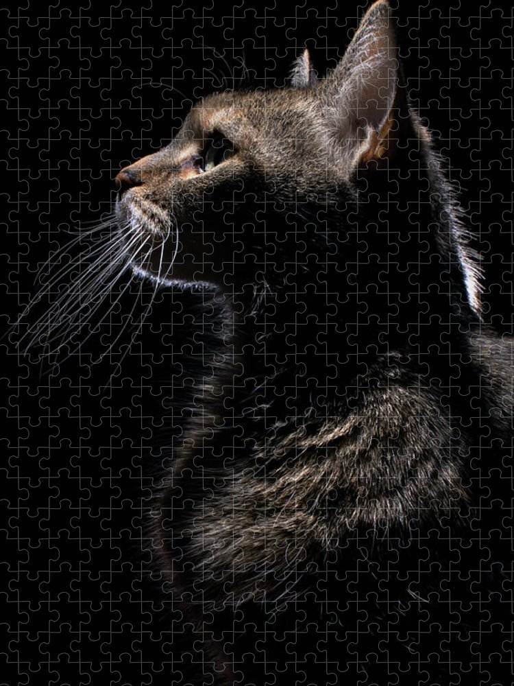 Pets Puzzle featuring the photograph Profile Of A Cat by Nina Pearman