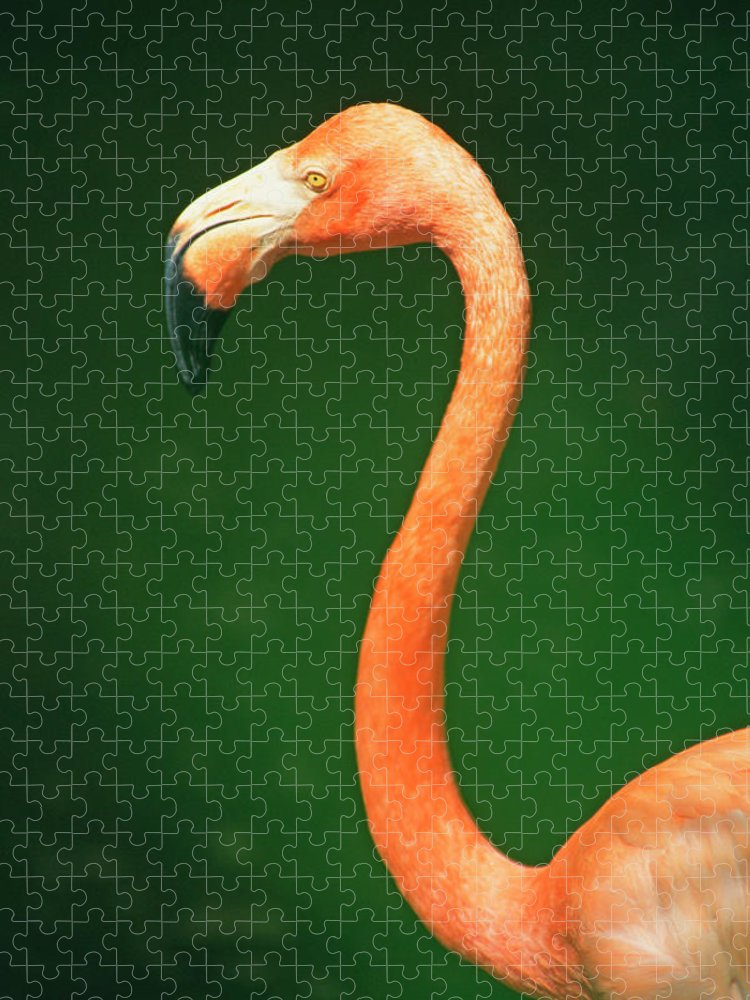 Curve Puzzle featuring the photograph Profile Of Flamingo by Jupiterimages