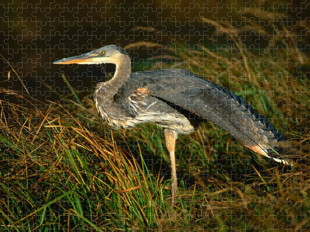 Grass Puzzle featuring the photograph Profile Of Great Blue Heron by Lonely Planet