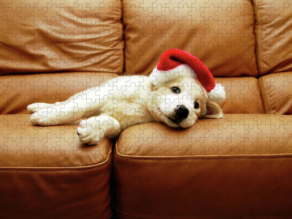 Pets Puzzle featuring the photograph Puppy Wears A Christmas Hat, Lounges On by Karina Santos