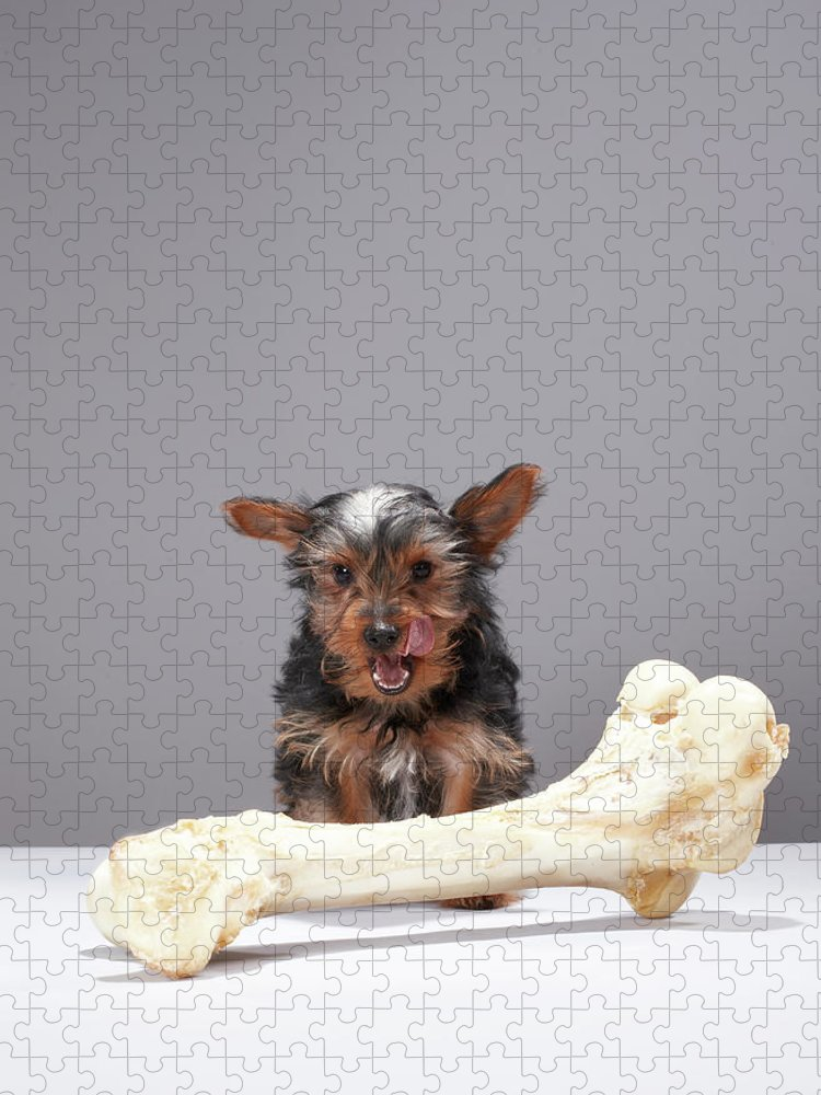 Pets Puzzle featuring the photograph Puppy With Oversized Bone by Martin Poole