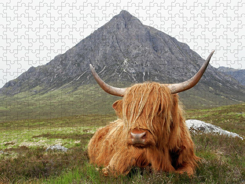 Horned Puzzle featuring the photograph Quintessential Scotland by Thedman