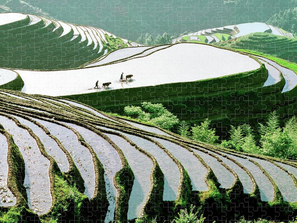 Chinese Culture Puzzle featuring the photograph Rice Terraces by Kingwu