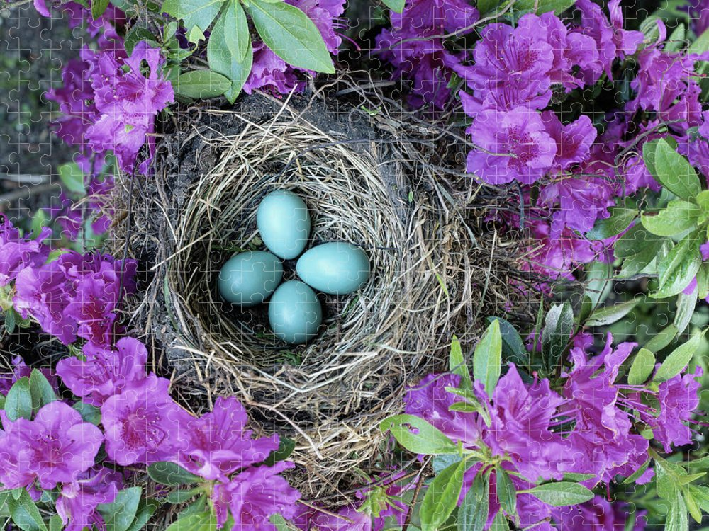 Security Puzzle featuring the photograph Robins Nest In Azalea Bush, Spring by Art Wolfe