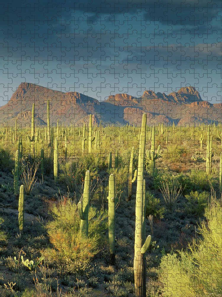 Saguaro Cactus Puzzle featuring the photograph Saguaro Cactus In Sonoran Desert And by Kencanning