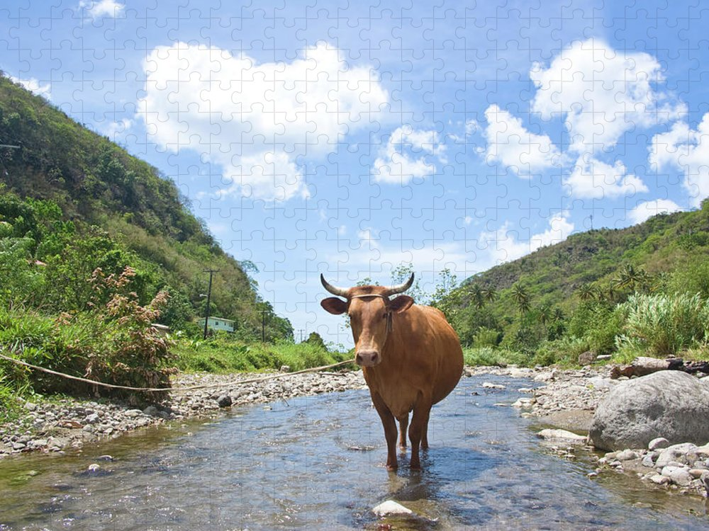 Scenics Puzzle featuring the photograph Scenic Landscape With Stream And Cow by Jaminwell