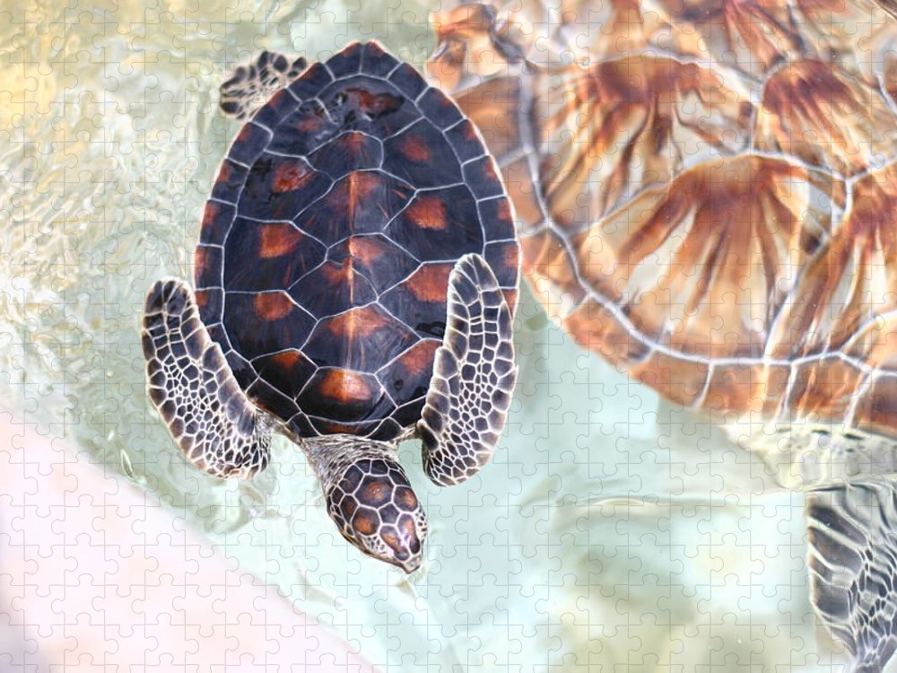 Underwater Puzzle featuring the photograph Sea Turtle by Alyssa B. Young