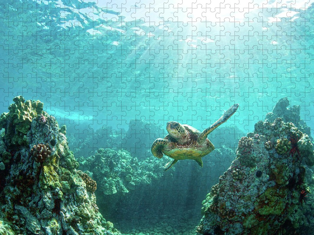 Underwater Puzzle featuring the photograph Sea Turtle Coral Reef by M.m. Sweet