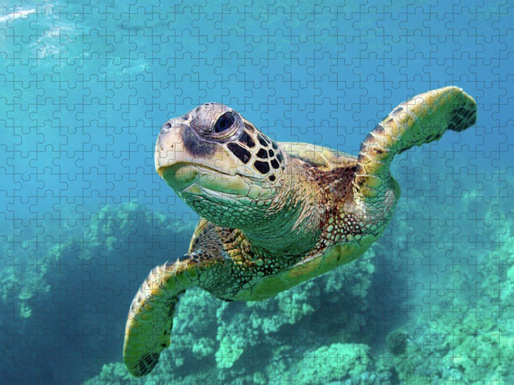 Underwater Puzzle featuring the photograph Sea Turtle, Hawaii by M Swiet Productions