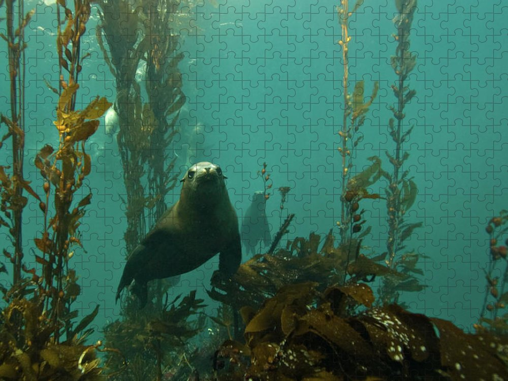 Sea Lion Puzzle featuring the photograph Sealion by Douglas Klug