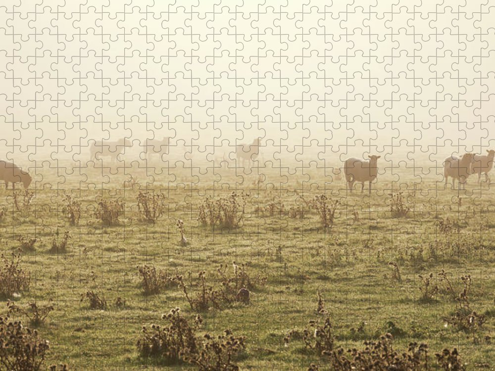 Dawn Puzzle featuring the photograph Sheep Viewed On A Misty Morning by Travelpix Ltd