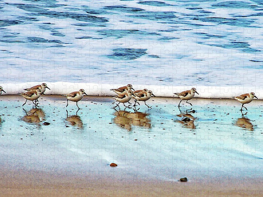 Animal Themes Puzzle featuring the photograph Shorebirds by Vanessa Mccauley