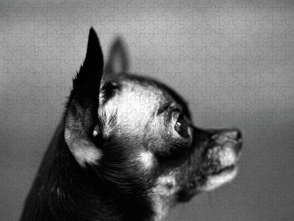 Animal Themes Puzzle featuring the photograph Small Dog, Profile by Henry Horenstein