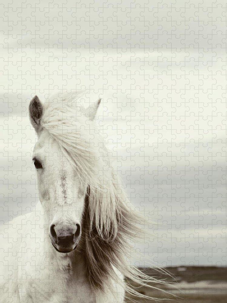 Horse Puzzle featuring the photograph ísold by Gigja Einarsdottir