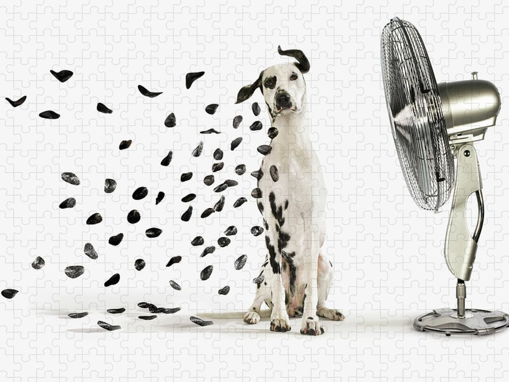 Pets Puzzle featuring the photograph Spots Flying Off Dalmation Dog by Gandee Vasan