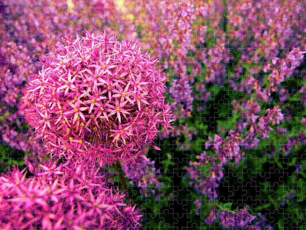 Purple Puzzle featuring the photograph Spring Flowers In Garden by Flash Parker
