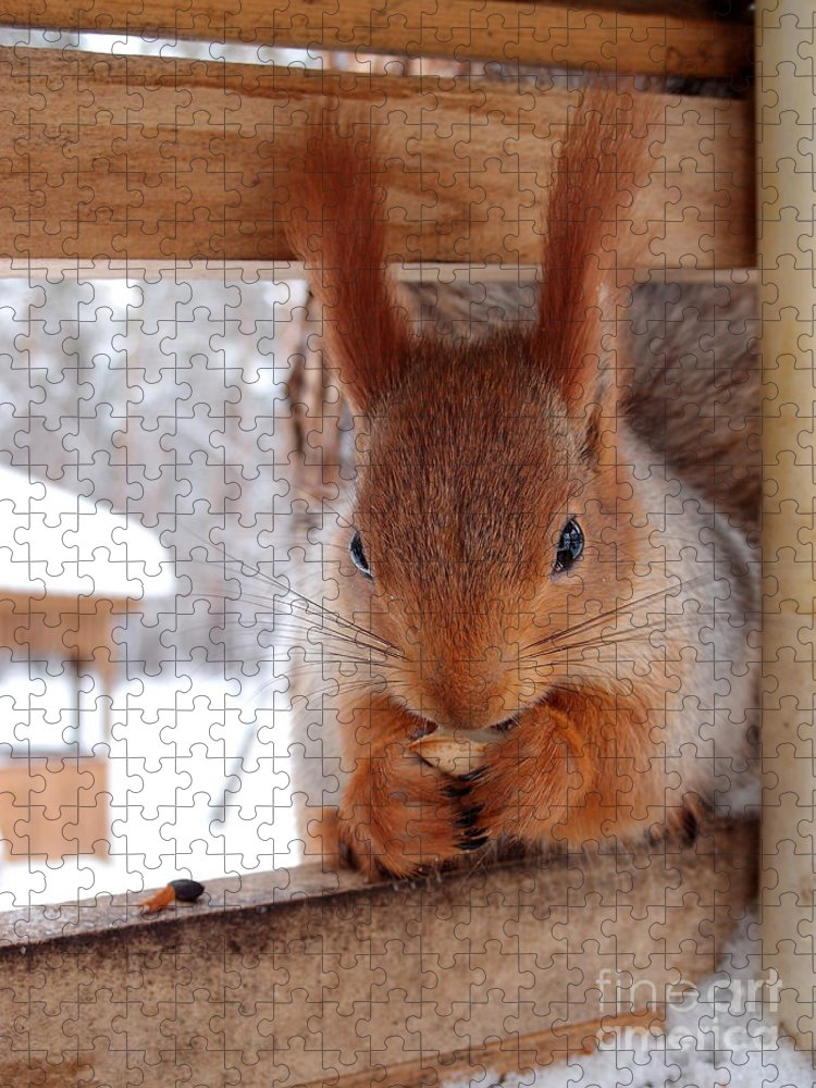 Fur Puzzle featuring the photograph Squirrel Omsk Region Siberia Russia by Aleksander Karpenko