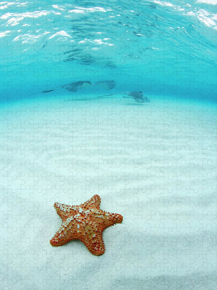 Underwater Puzzle featuring the photograph Starfish And Southern Stingray At by Justin Lewis