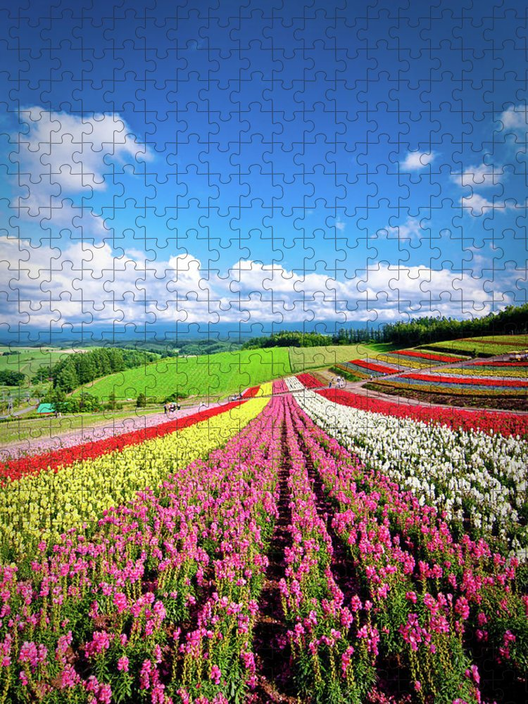 Tranquility Puzzle featuring the photograph Summer Of Furano by Grace's Photo