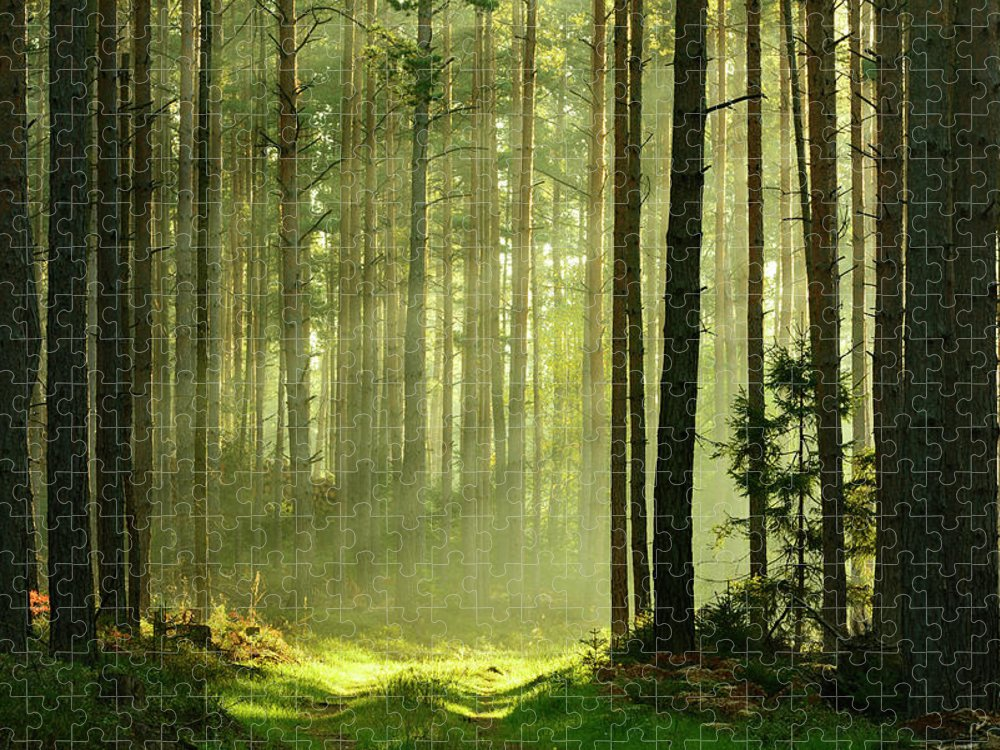Scenics Puzzle featuring the photograph Sunbeams Breaking Through Pine Tree by Avtg