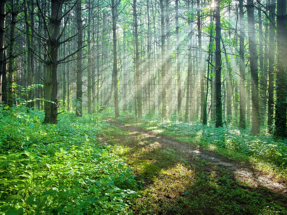 Outdoors Puzzle featuring the photograph Sunbeams Filtering Through Trees On A by Drnadig