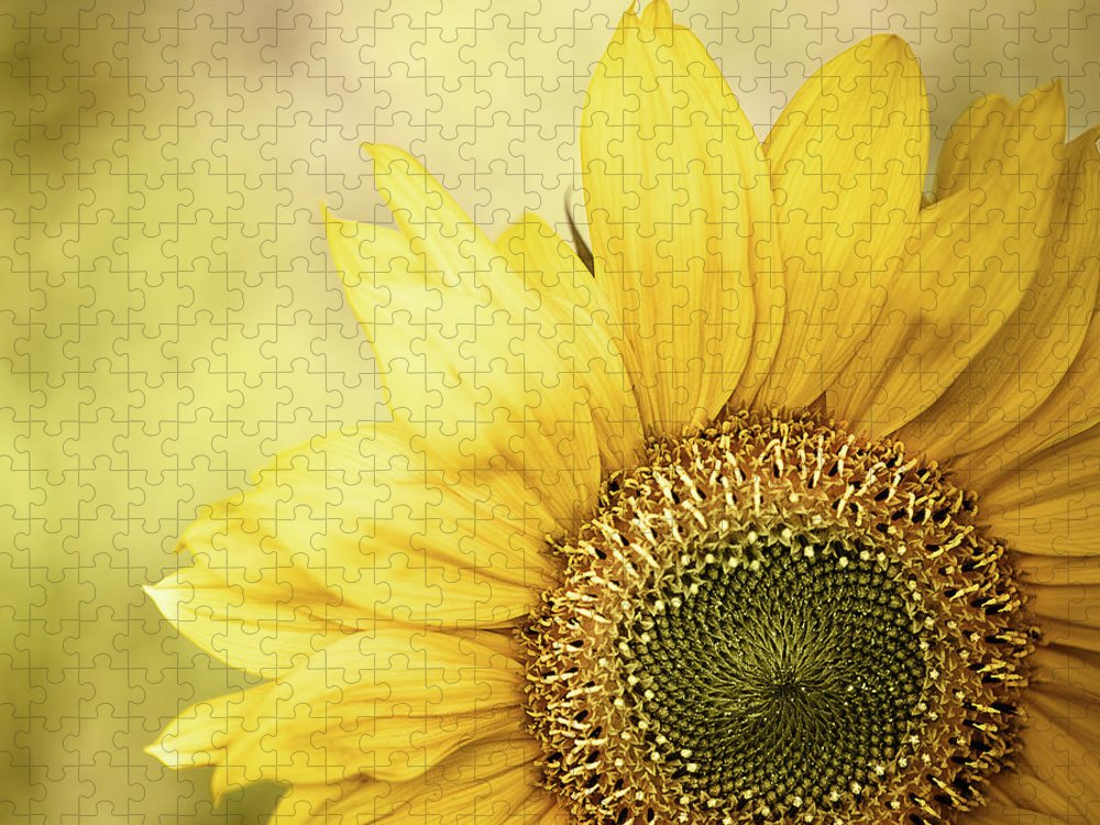 Outdoors Puzzle featuring the photograph Sunflower Blossom With Bokeh Background by Elisabeth Schmitt