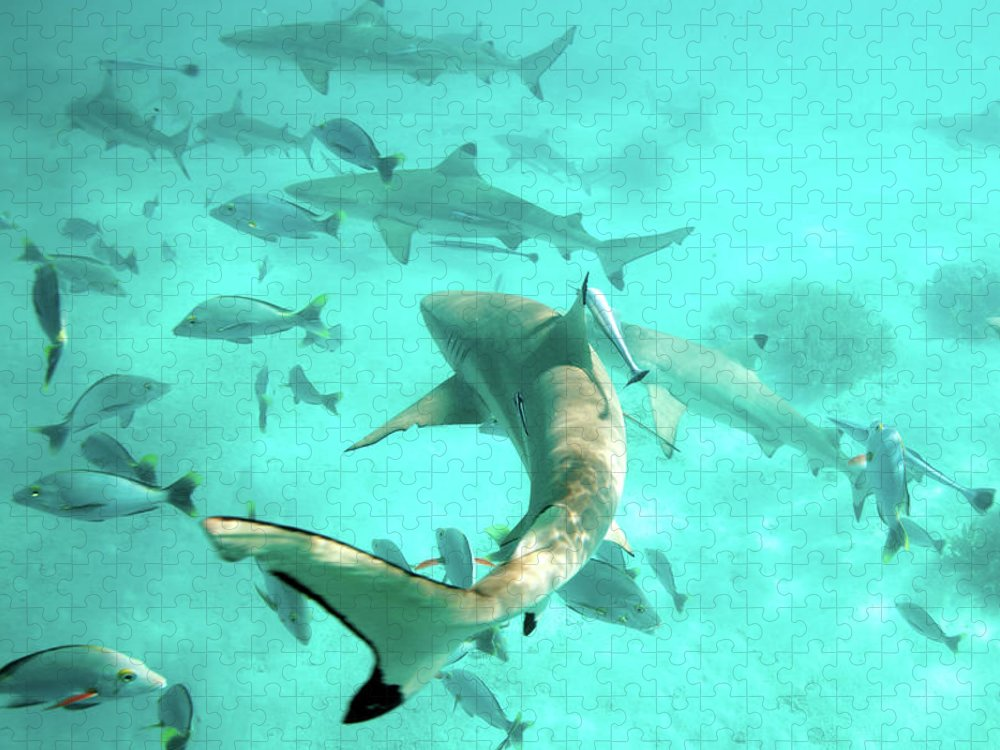 Underwater Puzzle featuring the photograph Tahiti Sharks by M Swiet Productions
