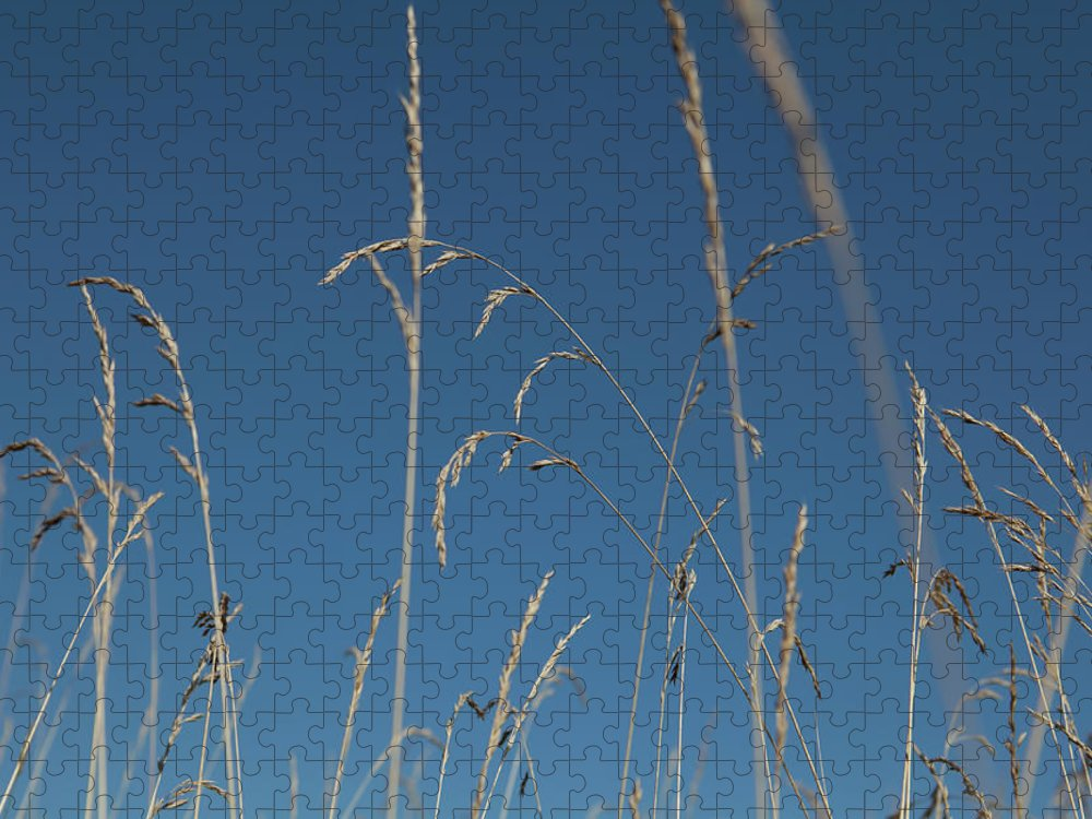 Tranquility Puzzle featuring the photograph Tall Grasses Swaying Against A Blue Sky by Lauren Krohn