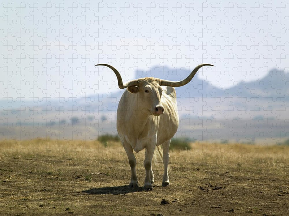 Horned Puzzle featuring the photograph Texas Longhorn by Joseph Sohm-visions Of America