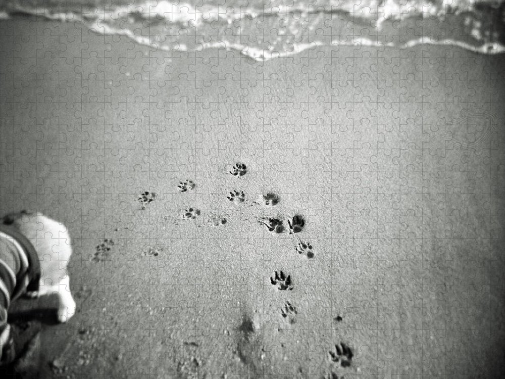 Pets Puzzle featuring the photograph The Beach by Moaan