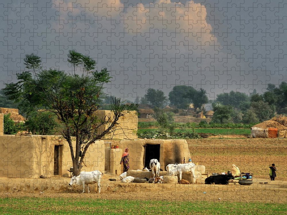 Grass Puzzle featuring the photograph The Village Of Punjab by Nadeem Khawar