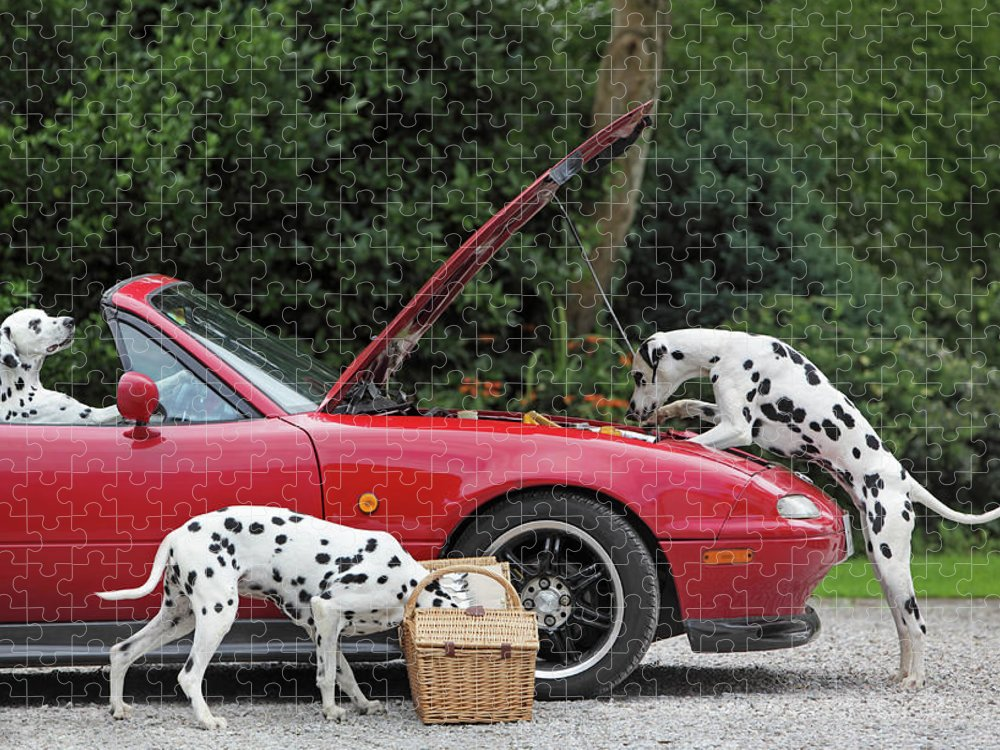 Pets Puzzle featuring the photograph Three Dalmatians Around Red Sports Car by Peter Cade