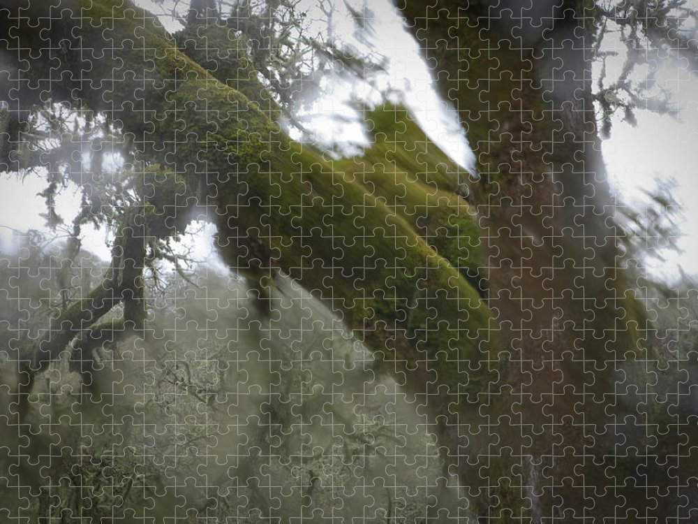 Horror Puzzle featuring the photograph Trees Through Car Windshield In Rain by Diane Miller