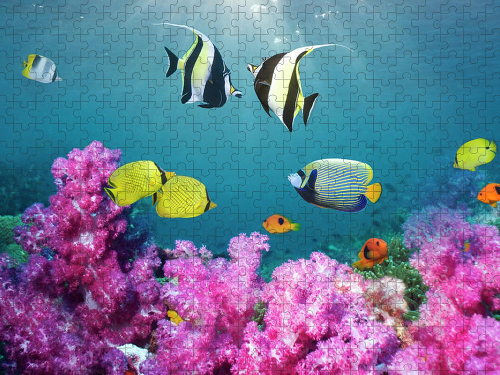 Tranquility Puzzle featuring the photograph Tropical Reef Fish Over Soft Corals by Georgette Douwma