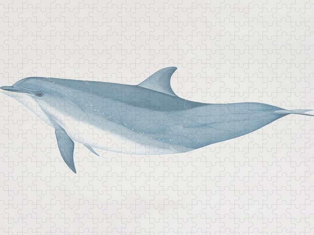 White Background Puzzle featuring the digital art Tursiops Truncatus, Bottlenose Dolphin by Martin Camm