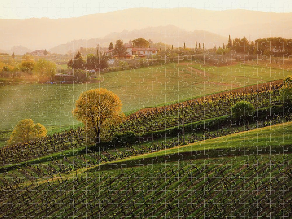 Scenics Puzzle featuring the photograph Tuscan Vinyards by John And Tina Reid