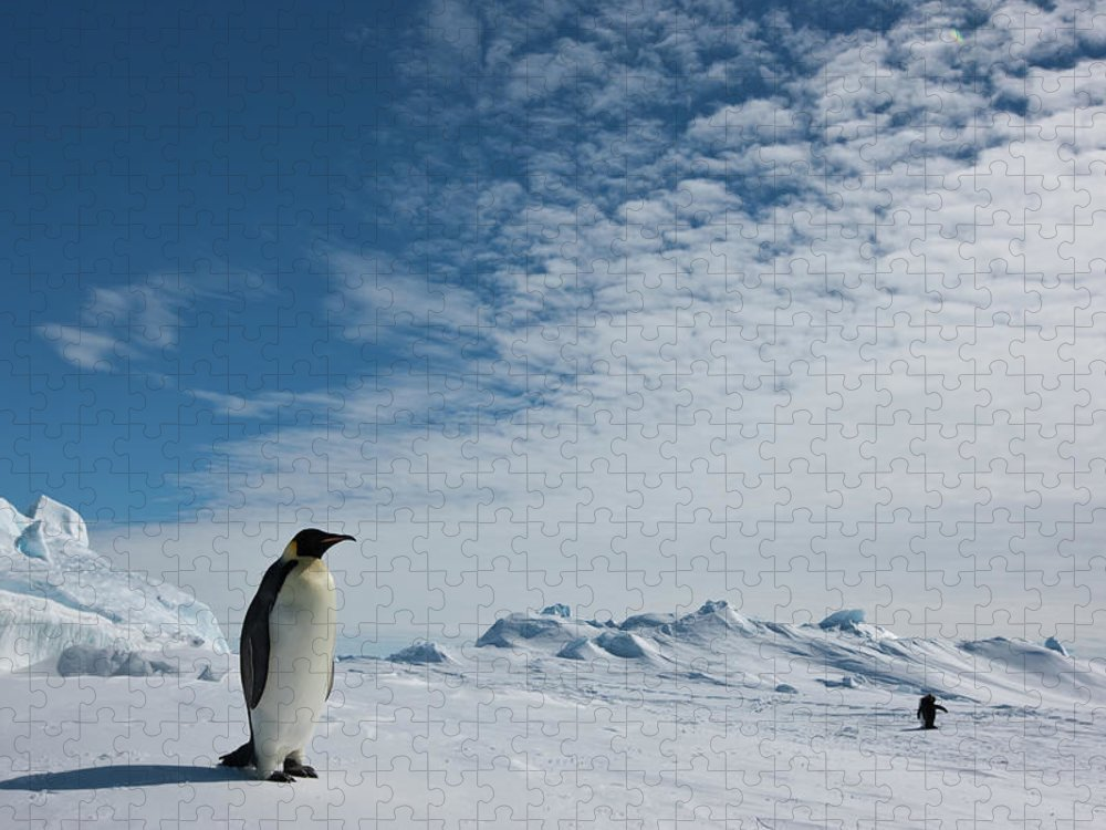 Emperor Penguin Puzzle featuring the photograph Two Emperor Penguins by A Gandola