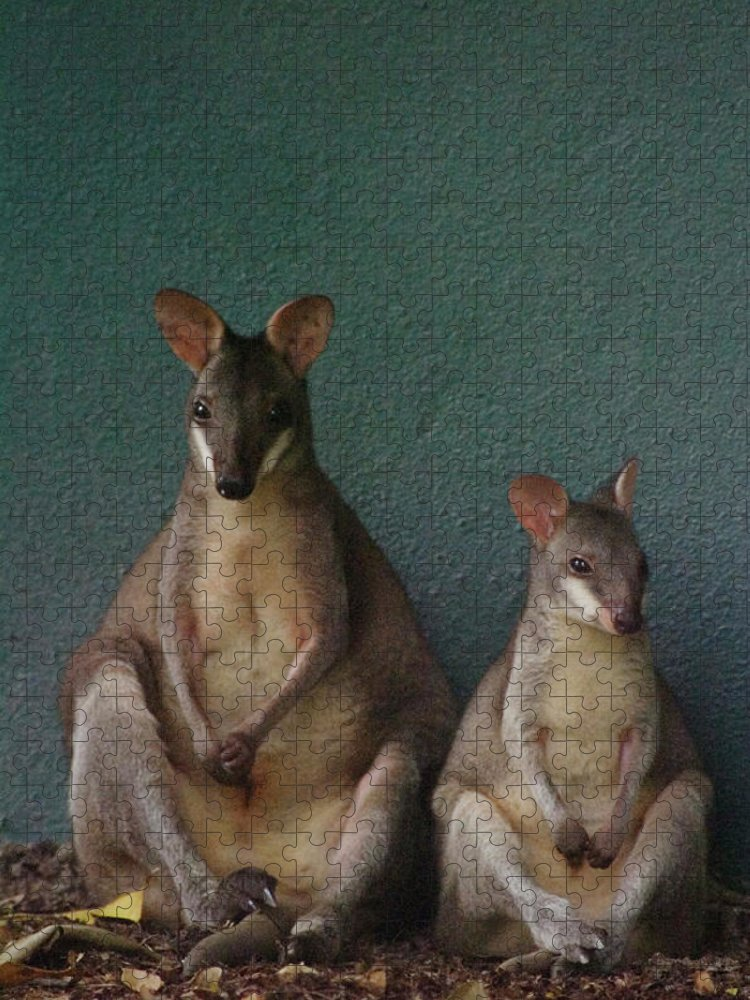 Animal Themes Puzzle featuring the photograph Two Sitting Wallabies by Ming Thein / Mingthein.com