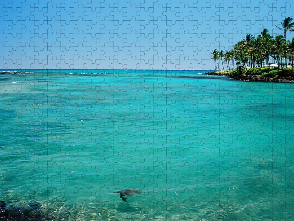 Water's Edge Puzzle featuring the photograph Underwater Turtle In Maui Hawaii Resort by Ejs9