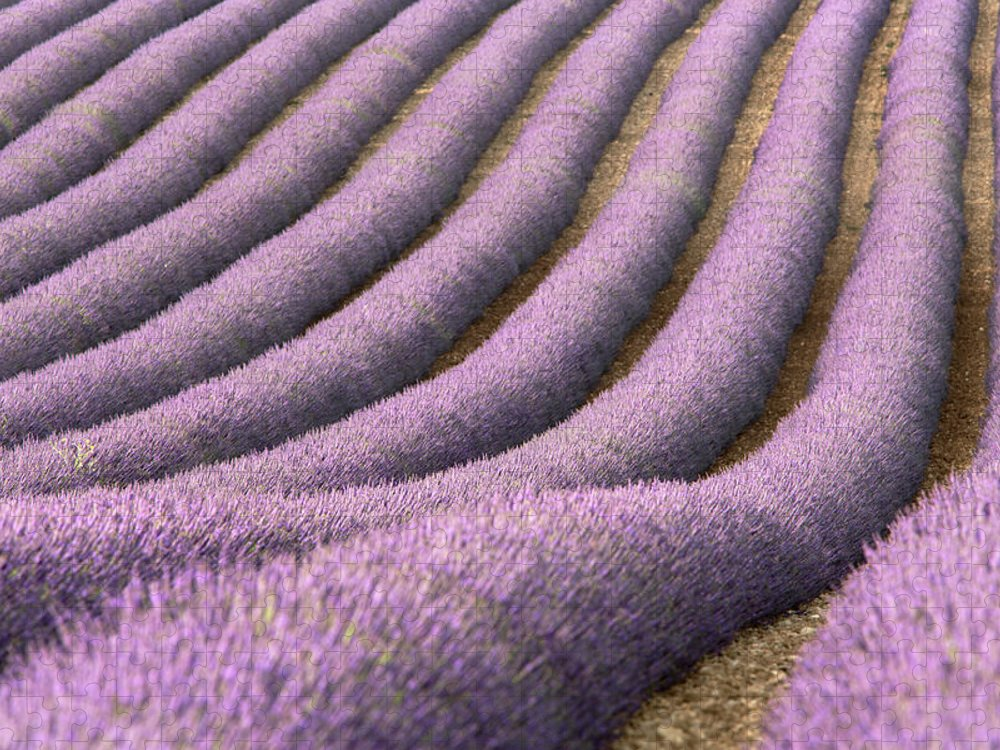 In A Row Puzzle featuring the photograph View Of Cultivated Lavender Field by Michele Berti