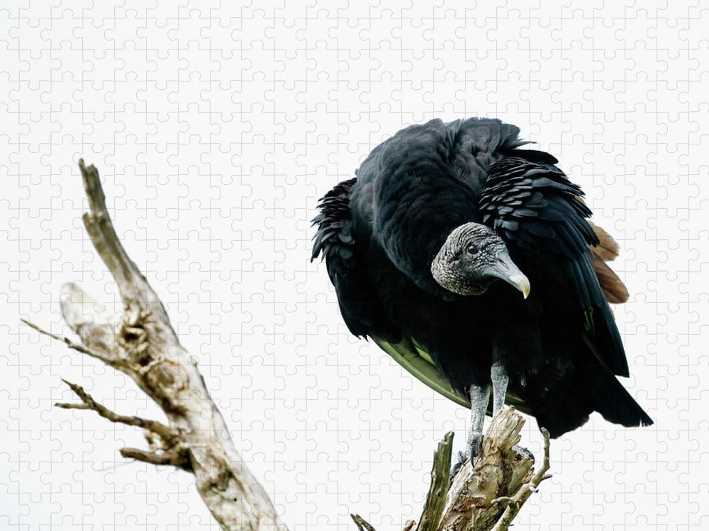 Animal Themes Puzzle featuring the photograph Vulture Perched On Tree by Roine Magnusson