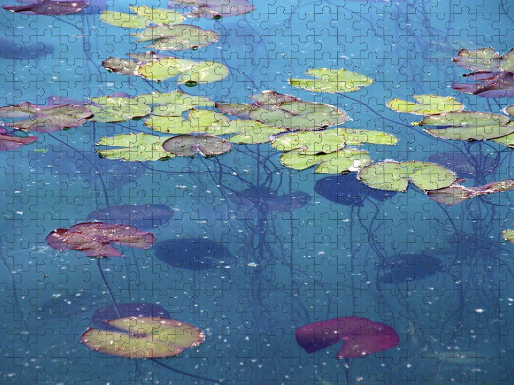 Shadow Puzzle featuring the photograph Water Lillies Leaves by Suzyco