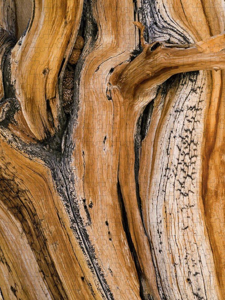 Weathered Puzzle featuring the photograph Weathered Wood Of Ancient Bristlecone by Kevin Schafer