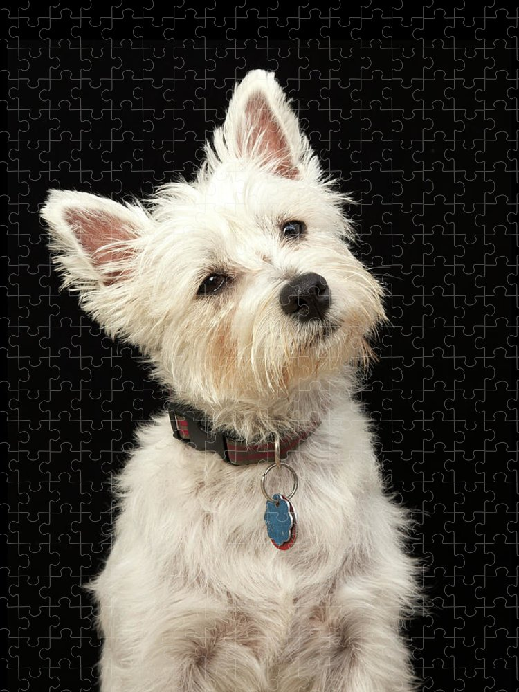 Pets Puzzle featuring the photograph Westie West Highland Terrier With by M Photo