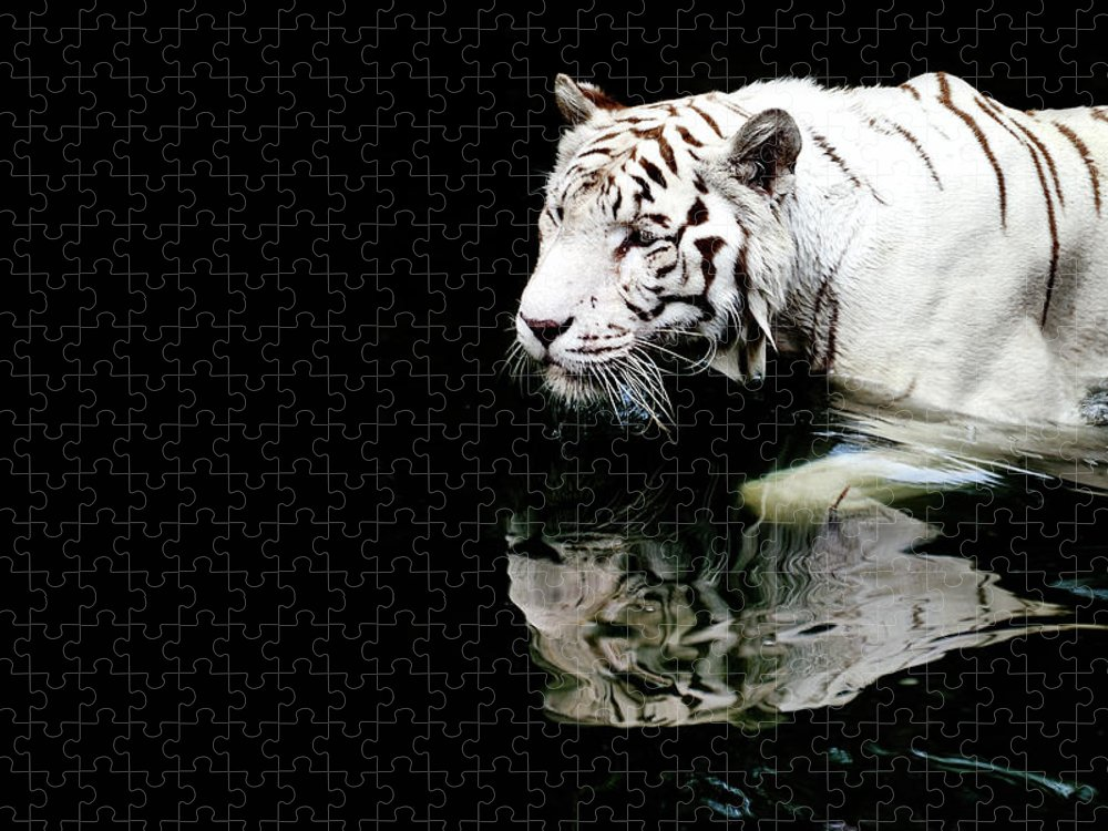 Three Quarter Length Puzzle featuring the photograph White Tiger In Water by Carlina Teteris