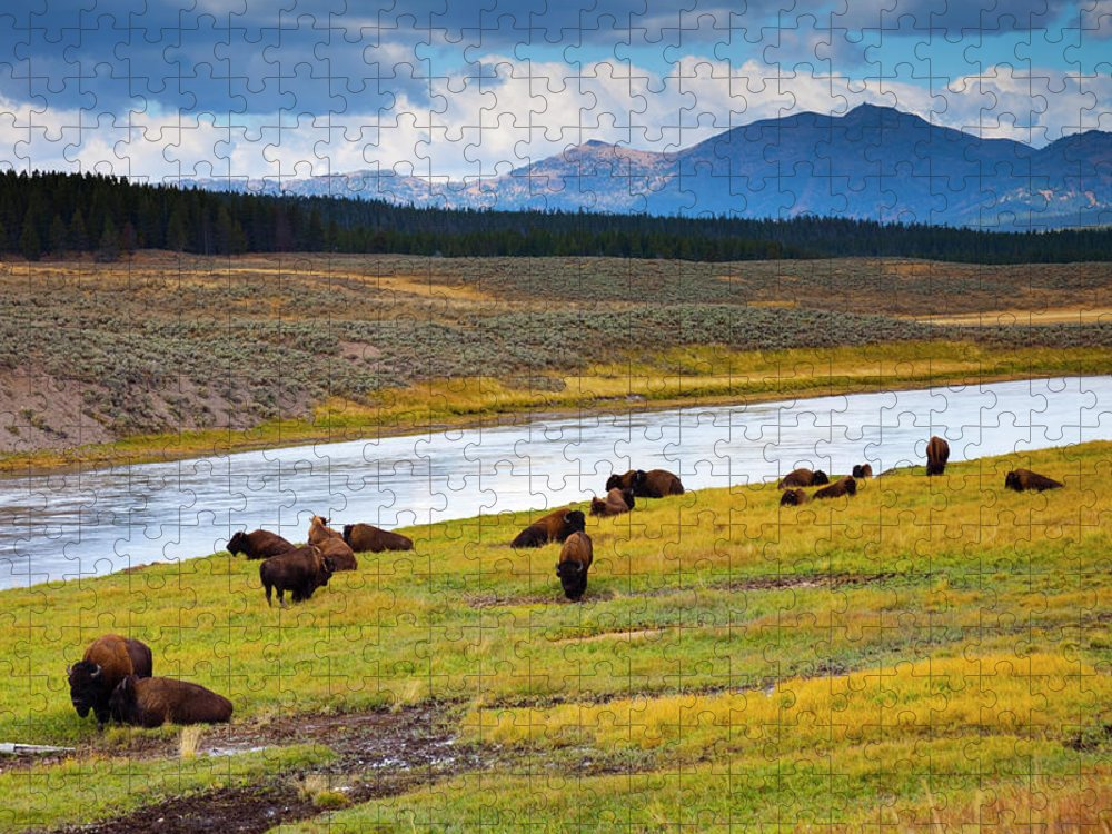 Scenics Puzzle featuring the photograph Wild Bison Roam Free Beneath Mountains by Jamesbrey