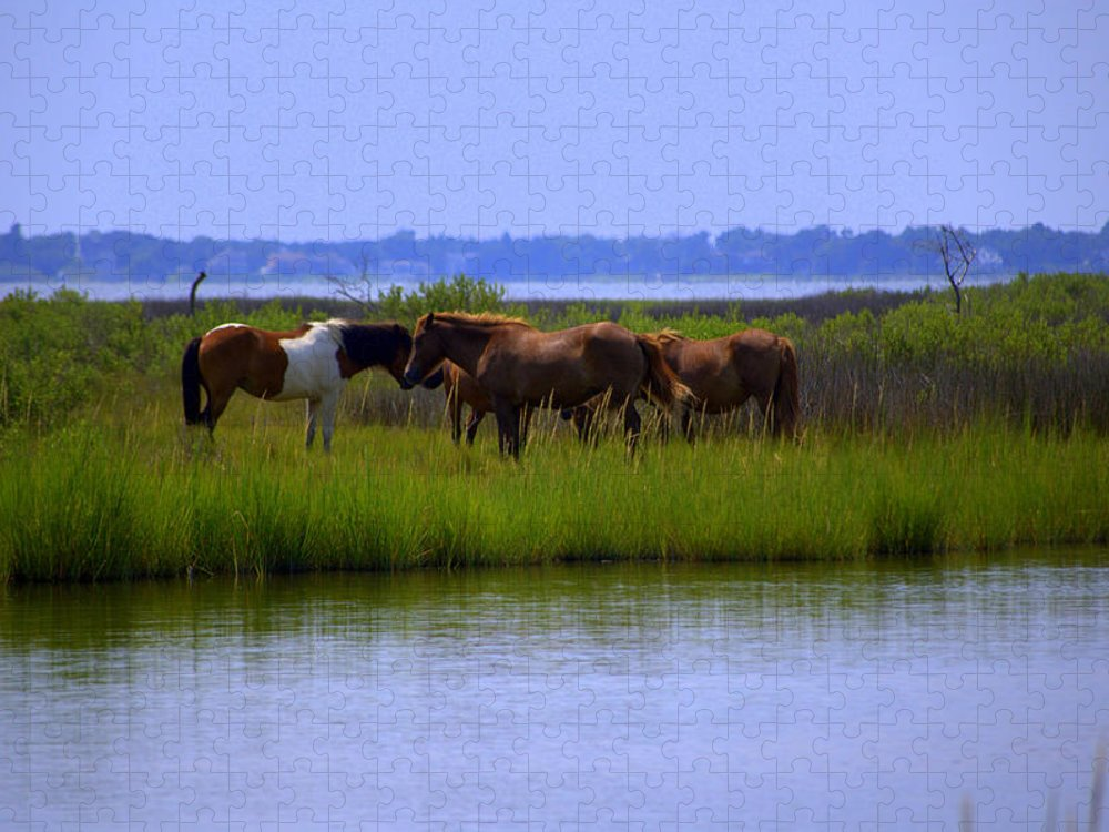 Horse Puzzle featuring the photograph Wild Horses Of Assateague Island by Robin Houde Photography