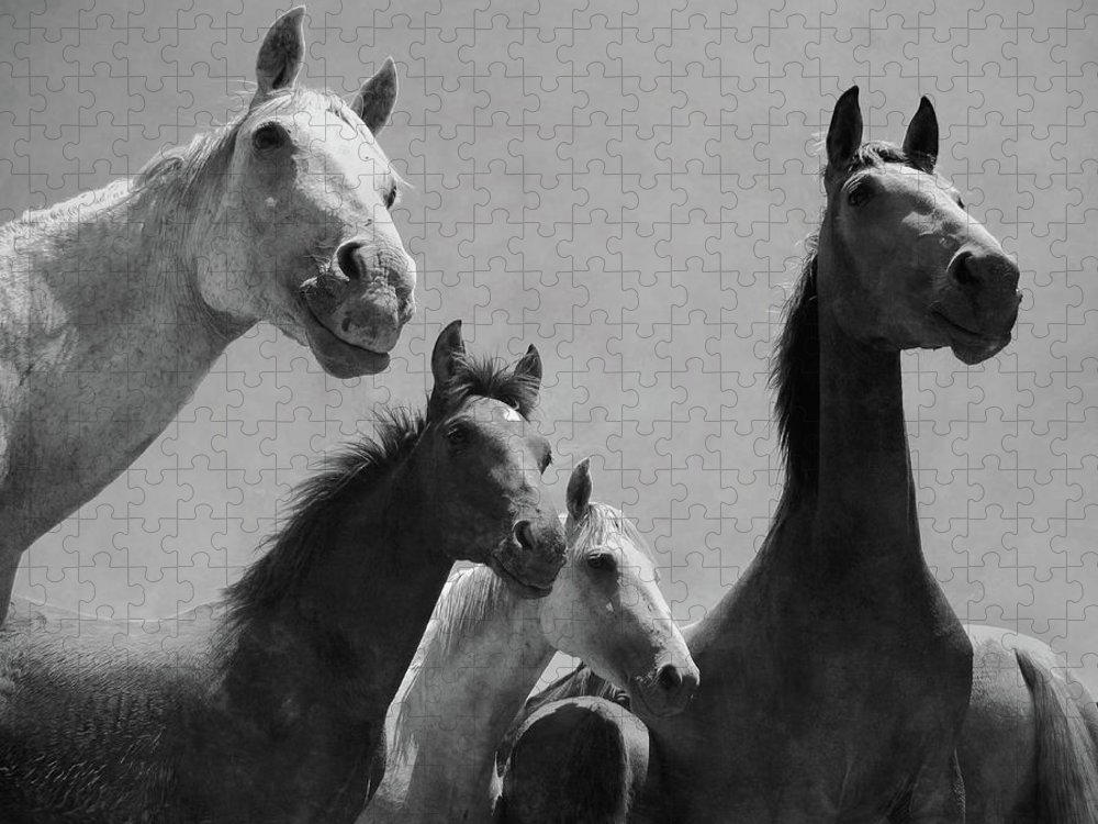 Horse Puzzle featuring the photograph Wild Horses Portrait by Antonio Arcos Aka Fotonstudio Photography