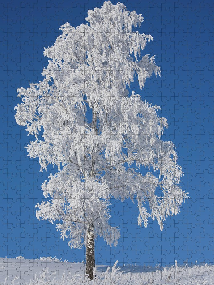 Scenics Puzzle featuring the photograph Winter Birch Tree by Luvo